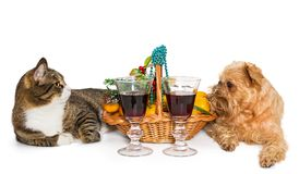 猫、狗和圣诞节篮子 库存图片