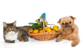 猫、狗和圣诞节篮子 图库摄影