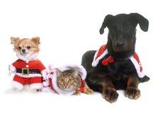 猫、狗和圣诞节 免版税库存照片