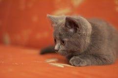 猫一点 免版税库存图片