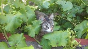 猫一点 免版税库存照片
