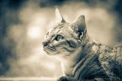 猫一点 图库摄影