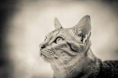猫一点 免版税图库摄影