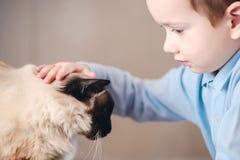 猫一起儿童巴厘语使用 逗人喜爱的男孩 库存图片