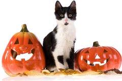 猫万圣节南瓜 免版税库存图片