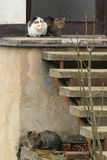 猫三重奏  库存照片