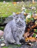 猫与叶子坐他的头 免版税库存图片