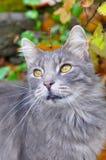 猫与叶子坐他的头 免版税库存照片