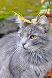 猫与叶子坐他的头 库存图片