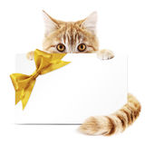 猫与在白色隔绝的金黄丝带弓的礼品券 免版税库存图片