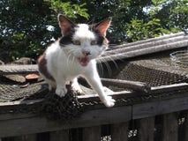 猫与摄影师谈话 免版税库存图片