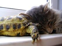 猫乌龟 免版税图库摄影