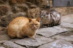 猫二 免版税库存图片