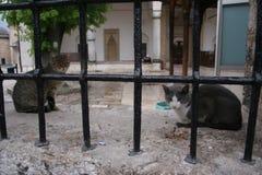 猫二 图库摄影
