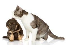 猫亲吻一只小狗。 库存照片