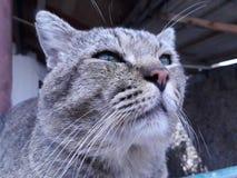 猫今后看了 免版税库存照片