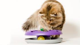 猫他使用的玩具年轻人 库存照片