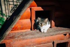 猫伊斯坦布尔 库存照片