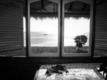 猫休息、开窗口对海滩和海洋背景B/W 免版税图库摄影