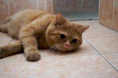 猫休息的年轻人 免版税库存图片