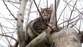 猫休息 影视素材
