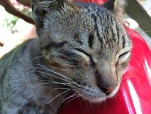猫休息 免版税图库摄影