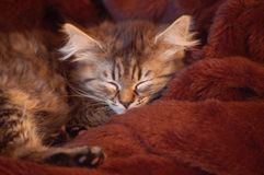 猫休眠年轻人 库存照片