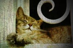 猫休眠 免版税库存照片