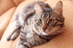 猫休闲 库存图片