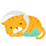 猫伤害用夹板固定的腿例证 库存图片