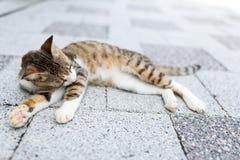猫位于的街道 免版税图库摄影