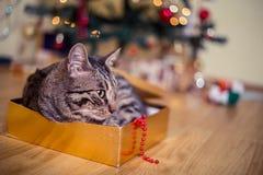 猫作为礼物 免版税库存照片