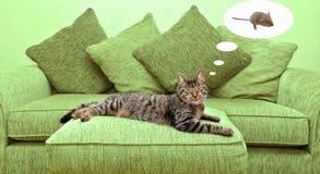 猫作梦 免版税库存图片