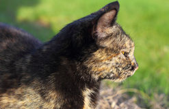 猫作梦 免版税图库摄影