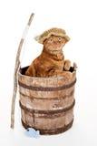 猫佩带的渔夫帽子 免版税库存图片