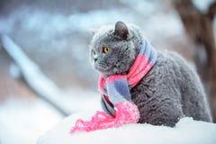 猫佩带的编织的围巾在多雪的冬天 免版税库存照片