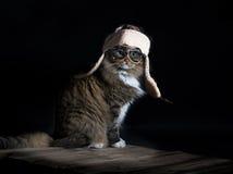 猫佩带的飞行员盖帽 免版税库存照片