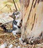 猫使用 免版税图库摄影