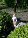 猫例证小猫向量 库存照片