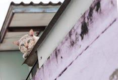 猫例证屋顶向量 免版税库存照片