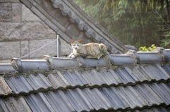 猫例证屋顶向量 图库摄影
