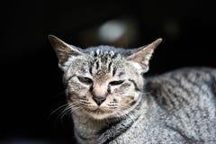 猫停留在窗口旁边下午 免版税库存照片