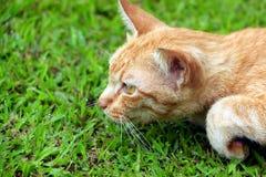 猫偷偷靠近 免版税库存图片