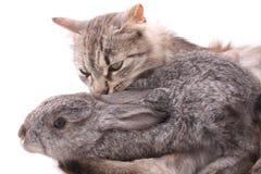 猫兔子 免版税库存照片