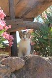 猫全部赌注,爱琴海村庄 免版税库存图片