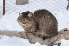 猫冬天 库存照片