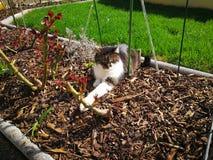 猫冷颤 免版税库存照片