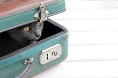 猫减速火箭的游人 免版税库存照片