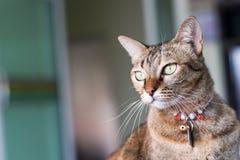 猫凝视投稿 库存图片