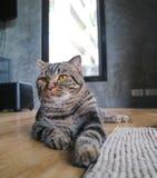 猫凝视薪水注意 图库摄影